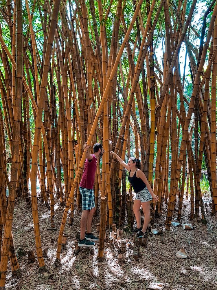 Brisbane-giardino-botanico