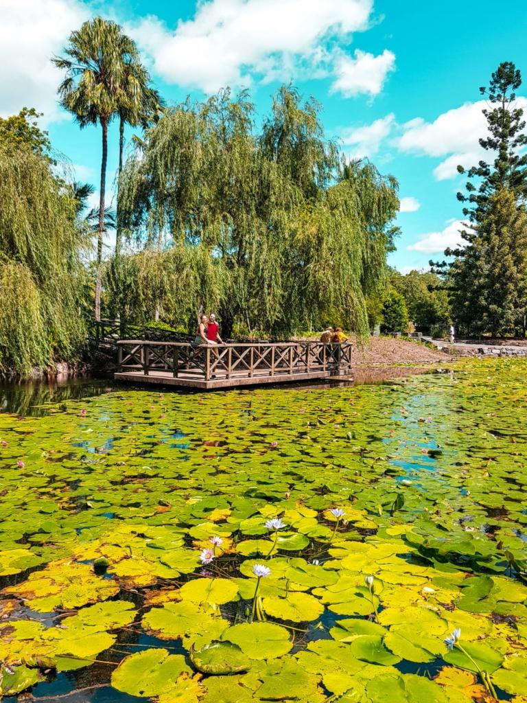 Giardino Botanico Brisbane Gratis Free Ninfee
